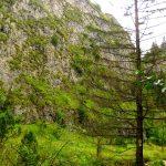 120 metrowe skały wapienne Wąwozu Homole