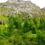 Wąwóz Homole widziany z dna doliny