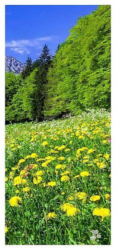 wiosna w pieninach - majowka w gorach pieniny1