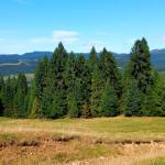 rezerwat Zaskalskie Bodnarówka - droga na szlaku