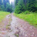 rezerwat Zaskalskie Bodnarówka - droga z Jaworek