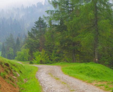 Rezerwat Zaskalskie Bodnarówka